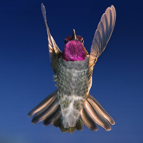 William Lee - The Conductor of Hummer Air Orchestra