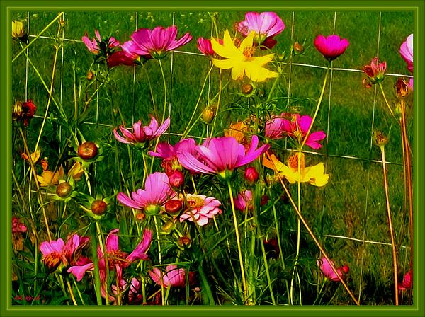 Debra Lynch - The Creation Of Flower Art