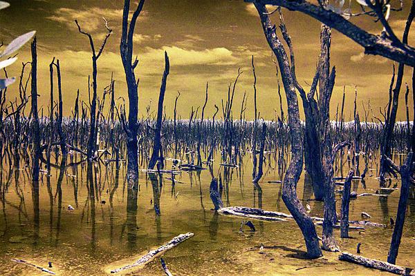 Don Columbus - The Dead Mangrove Swamp