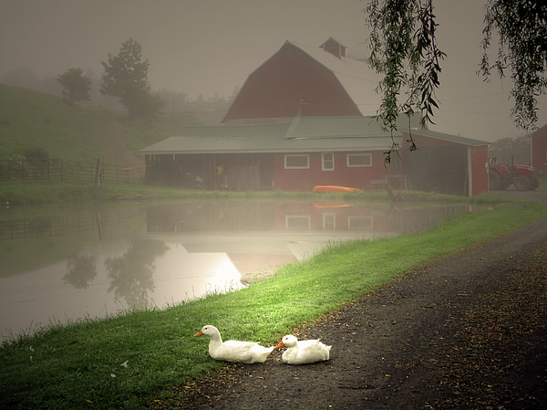 Patricia Keller - The Ducks In The Morning Fog At Maple Hill Farm