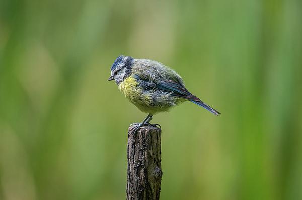 Stephen Jenkins - The early Bird