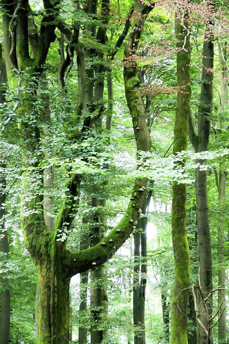 Rachel Narvaez - The Enchanted Woods