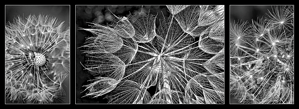 Steve Harrington - The Inner Weed Triptych bw