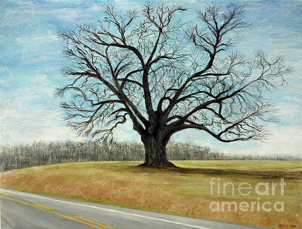 Lyric Lucas - The Keeler Oak