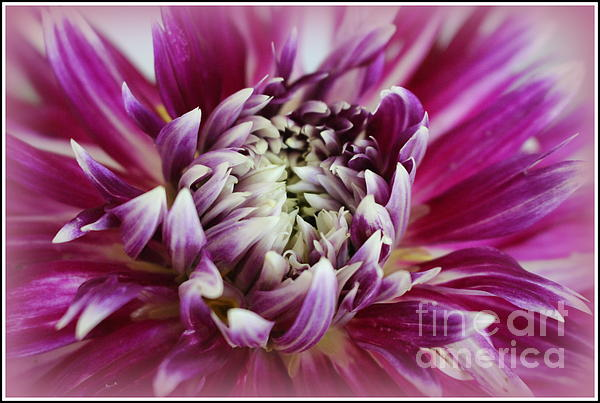 Dora Sofia Caputo Photographic Art and Design - The Last Dahlia of Summer
