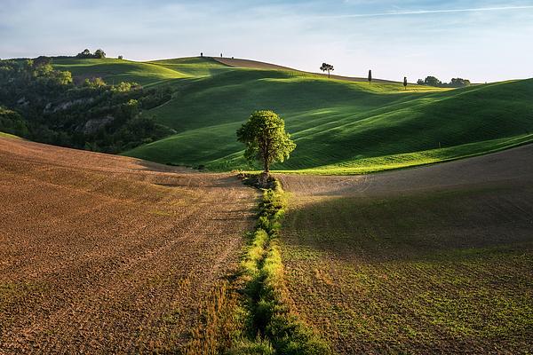 Matteo Viviani - The Lost love tree
