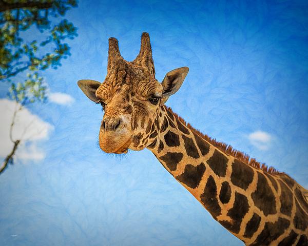 John M Bailey - The Lovable Giraffe