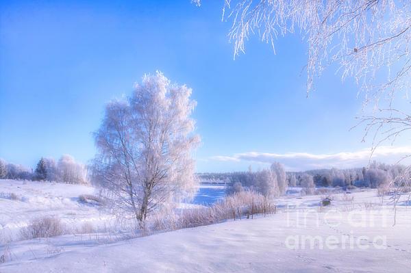 Veikko Suikkanen - The magic of winter 3