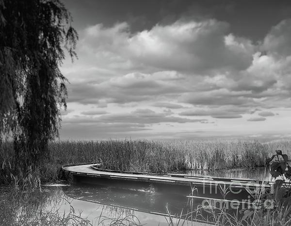 Janal Koenig - The Marsh-in black and white