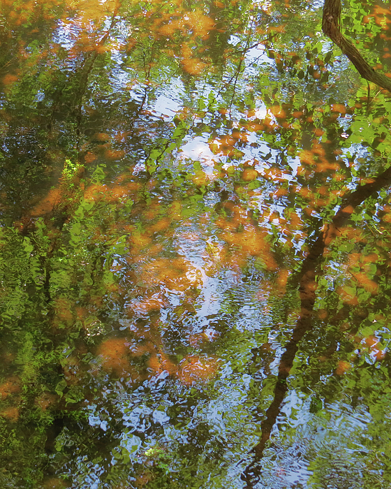 The Mill Pond In Autumn Photograph