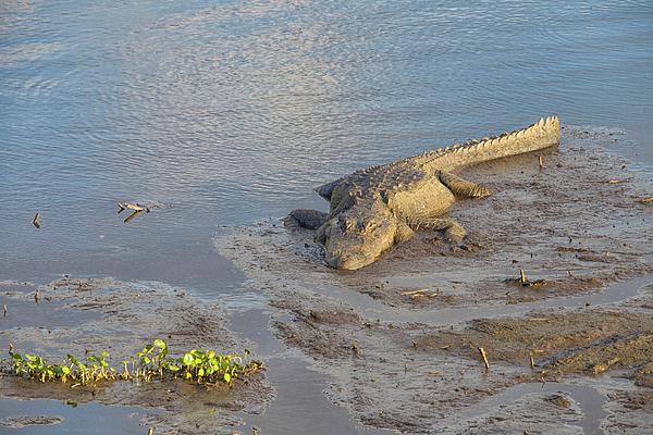 Felix Lai - The Muddy Alligator At Sunset