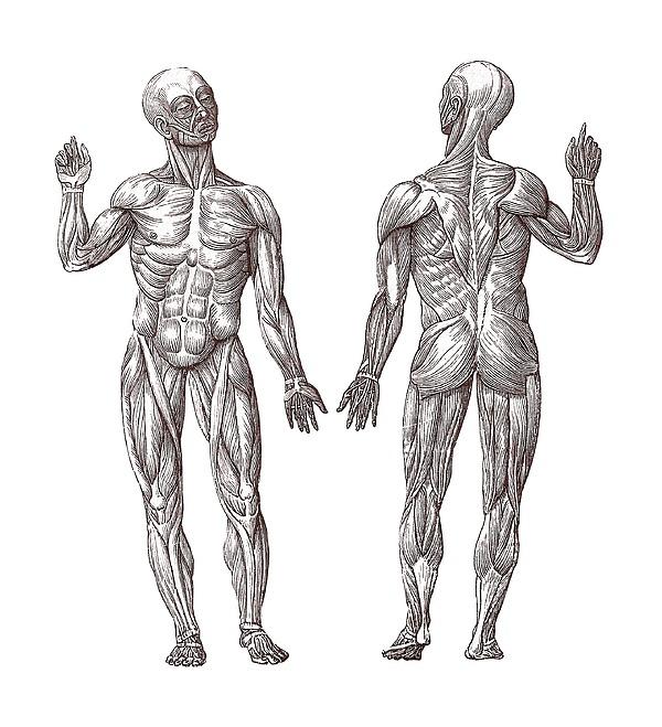 The Muscle Men Digital Art