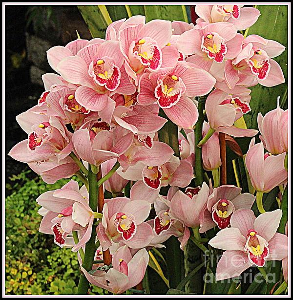 Dora Sofia Caputo Photographic Art and Design - The Orchid Garden