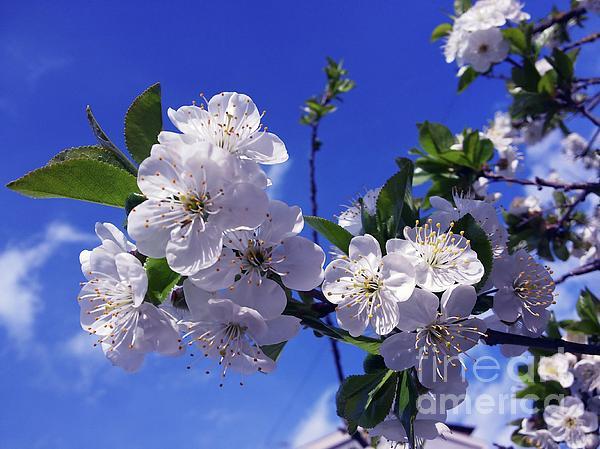 Jasna Dragun - The Smile Of Spring