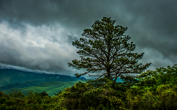 John Kimball - The Tree of Life