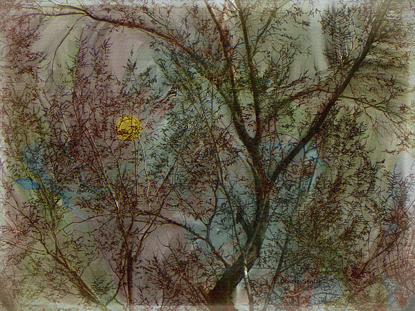 Lenore Senior - The Universe in a Tree