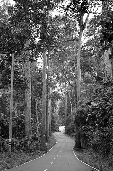 Phu Chiangdao - The way of nature
