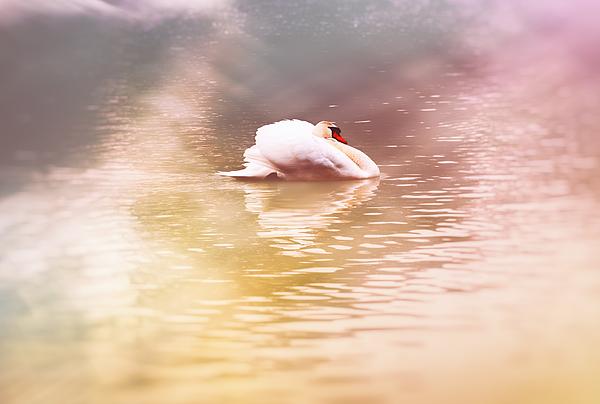 Jaroslav Buna - The White Pearl