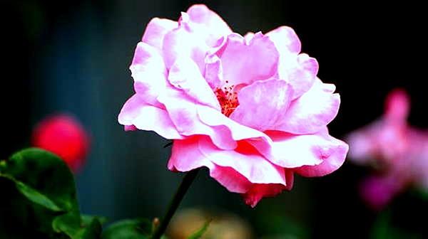 Maria  Wall - Think Pink