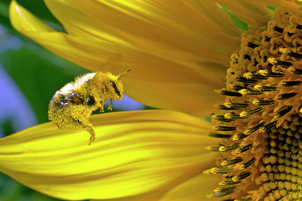 David Freuthal - This bee needs a bath