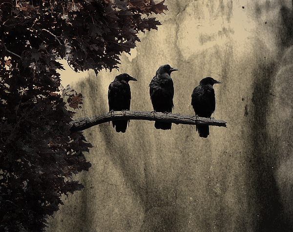 Gothicrow Images - Three Ravens Branch Out