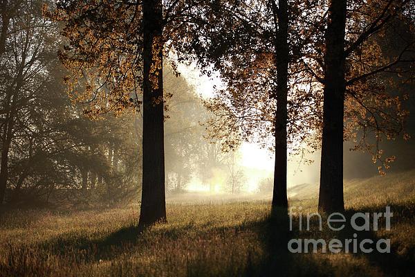 Jana Behr - Three Trees
