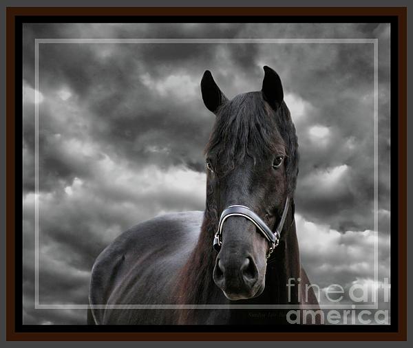 Sandra Huston - Thunder A Dark Horse, Framed