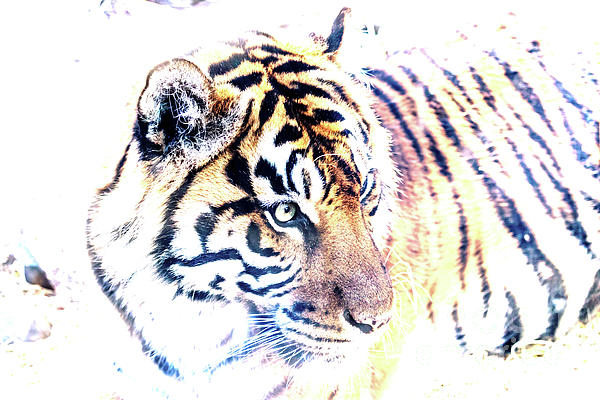 Kate Brown - Tiger Abstract