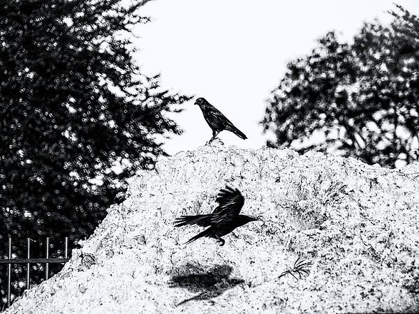 Jaroslav Buna - Time of Ravens