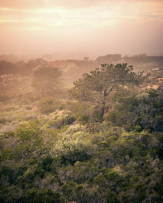 Alexander Kunz - Torrey Pines and Foggy Sunset