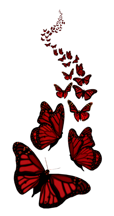 Trail Of The Red Butterflies Transparent Background