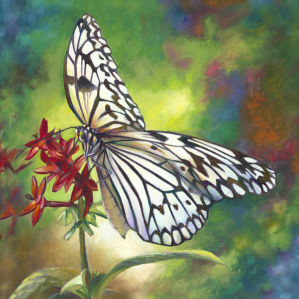 Nancy Tilles - Tree Nymph Butterfly
