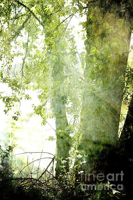 Pamela Moran - Tree Spirit