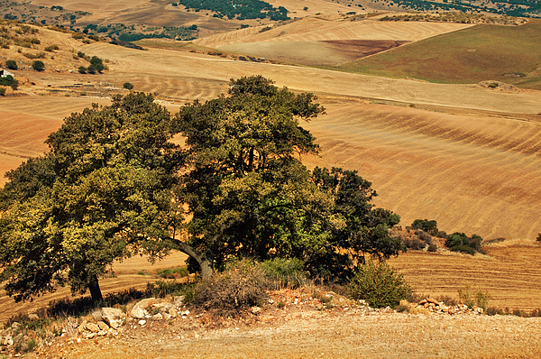 Jenny Rainbow - Trees in the Fields. Andalusia