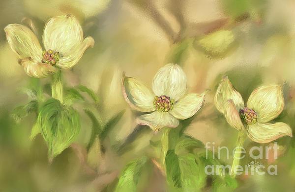 Lois Bryan - Triple Dogwood Blossoms In Evening Light