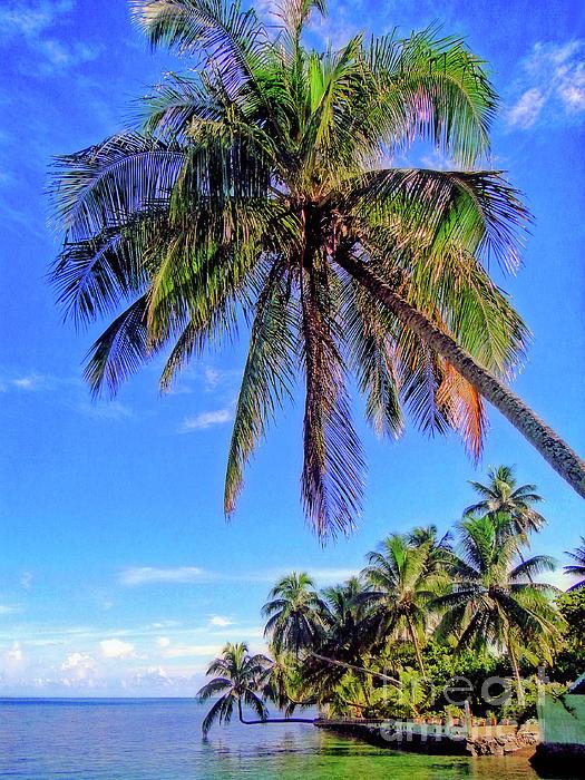 Sue Melvin - Tropical Palms