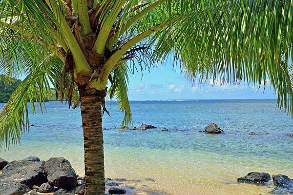 Kathy Yates - Tropical View