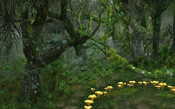 Diana Morningstar - Tulgey Wood