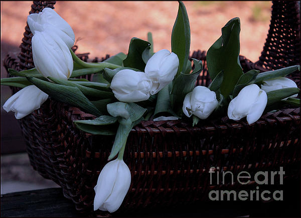 Luv Photography - Tulips in A Basket