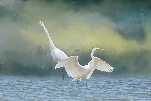 Linda Brody - Two Egrets in Water I With Foreground Fog