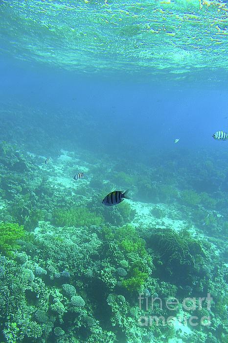 Eman Elmahdy - Under the sea