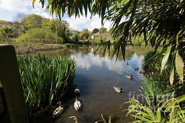 Terri Waters - Upper Mill Pond Hayle