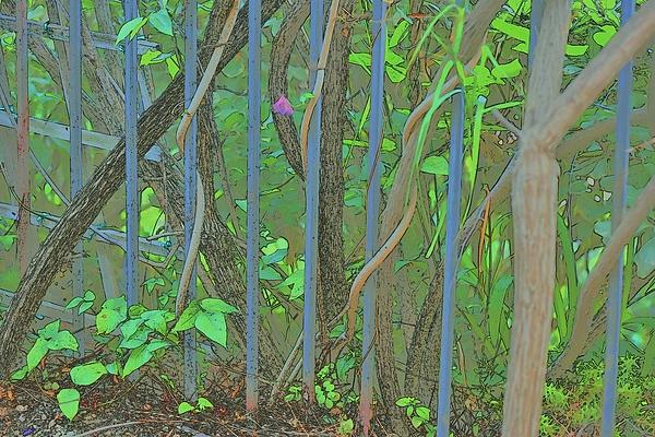 Linda Brody - Vines Abstract III