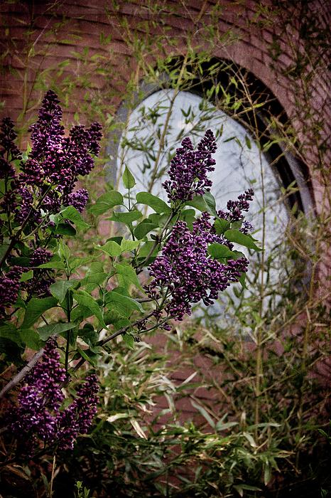 Joann Vitali - Vintage Lilac Tree on Brick Architecture