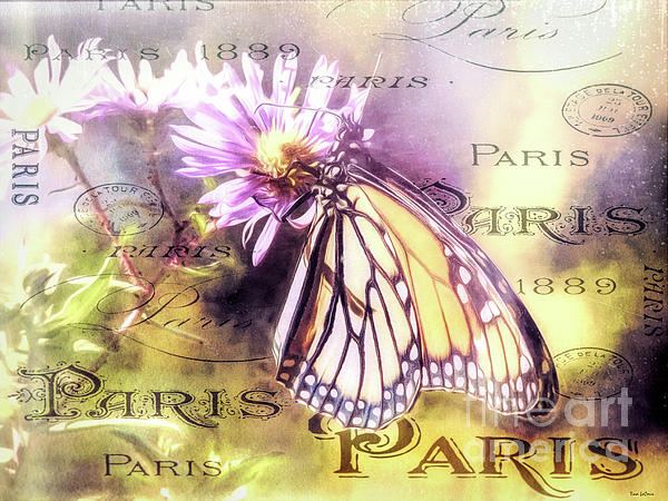Tina LeCour - Vintage Monarch Butterfly Print