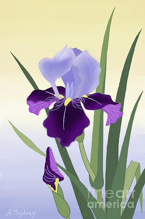Alexander Sydney - Violet Irises
