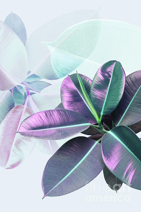 PrintsProject - Violet Rubber Plant