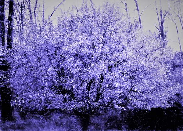 Debra Lynch - Violet Whispers In The Tree Tops