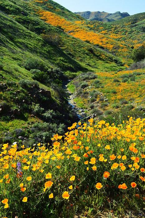 Glenn McCarthy Art and Photography - Walker Canyon Vista