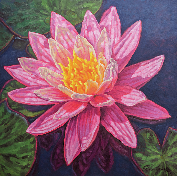 Fiona Craig - Water Lily Study 5